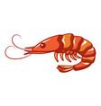 ocean shrimp icon cartoon style vector image