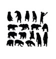 wild bear set silhouettes vector image