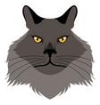 chantilly tiffany cat avatar cat breeds vector image