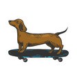 dog on skateboard color sketch engraving vector image