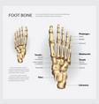 foot bone vector image
