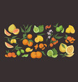 citrus colorful hand drawn set vector image