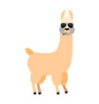 cool lama alpaca serious animal smoking cigar vector image vector image