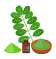 moringa vegetarian superfood healthy nutrition vector image vector image
