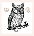 owl on a branch in full growth - isolated on white vector image vector image