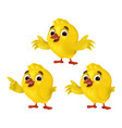 set cute cartoon chicks isolated on a white vector image