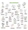 best herbal antidepressants vector image vector image