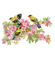 watercolor beautiful birds sitting on blooming vector image vector image