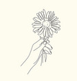 hand holding rose flower line drawing - stock vector image
