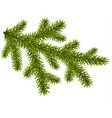 tree christmas branch isolated on white vector image vector image