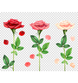Realistic Roses Set vector image vector image