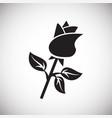 rose flower gift on white background vector image