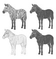 set of with zebra vector image vector image