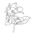 beautiful monochrome black and white flower vector image
