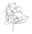 Beautiful monochrome black and white flower