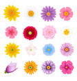 summer flowers set vector image vector image
