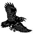 a raven in flight vector image