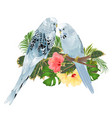 birds budgerigars home pets blue pets parakeets vector image vector image