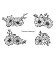 cosmos flower and leaf hand drawn botanical vector image vector image