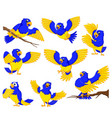 dashing parrots with the gold accent vector image vector image