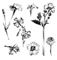 hand drawn spring flowers vector image