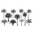 palm trees big set vector image
