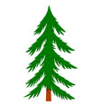 pine tree in cartoon style isolated on white vector image vector image