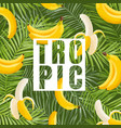 tropical design with banana and palm leaves vector image