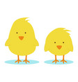 little chickens vector image