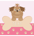 Little glamour tan Shih Tzu dog and big bone Card vector image vector image