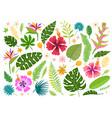 set cartoon rainforest floral elements vector image