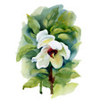 summer white watercolor flower on white background vector image
