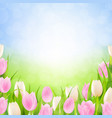 pastel spring tulips border vector image