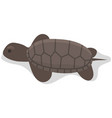 sea turtle isolated on white background reptile vector image