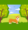 happy cute corgi dog is walking in green summer vector image