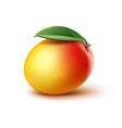 mango with leaf vector image vector image