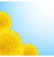 Flowers Dandelion Border vector image vector image