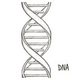 gold dna dna symbol dna helix symbol gene icon vector image vector image