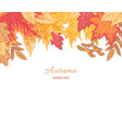 multicolor fallen leaves vector image