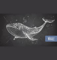 realistic chalk drawing whale vector image