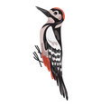 woodpecker icon cartoon style vector image vector image