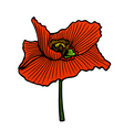 summer floral bouquet with red poppies vector image