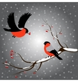 Bullfinch on rowan branch snow merry christmas vector image vector image