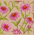 echinacea purpurea pattern vector image vector image