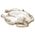 engraving raw chicken vector image vector image