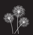 black and white dandelion set vector image