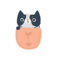 cat or kitten character in pocket flat vector image vector image