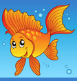 cute goldfish in water vector image