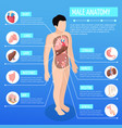 male anatomy isometric poster vector image