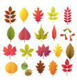 paper cut autumn leaves set fall leaves colorful vector image vector image